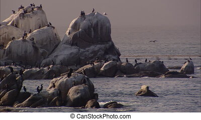 Cormorant Island Pan - LS panning right to left a a rocky...