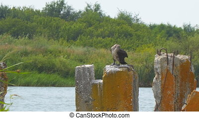 Cormorant sitting on concrete block against the bushes and...