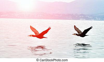 Cormorants flying over the water