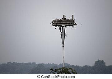 cormorants nest on the island