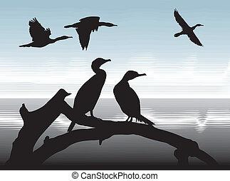 Cormorants on lake shore