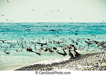 Cormorants on the sea coast