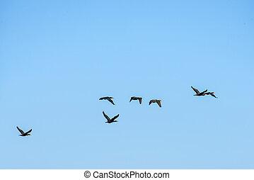 Cormorants on the sky