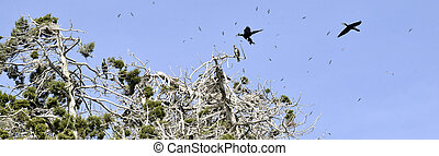 cormorants, pássaros, ligado, a, árvores, ligado, ilha,...