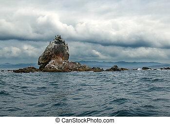 cormorants sitting on the rocks