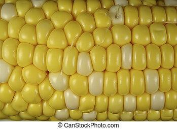 Corn 3