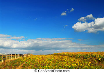 Corn and soya fields - Farm fields on soybeans and corn...