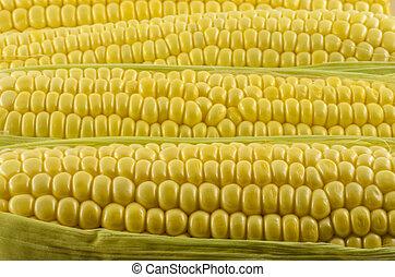 Corn Close Up 05