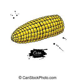 Corn cob hand drawn vector illustration.