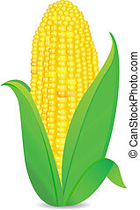 corn cob with grenn leaves