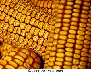 corn cobs background