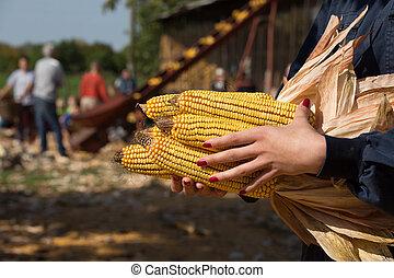 Corn cobs in woman's hand