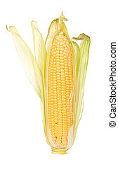 raw corn with green leaves on a white background