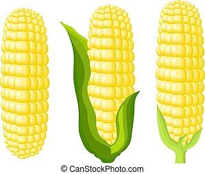 Corn cobs on white background. Vector Illustration set
