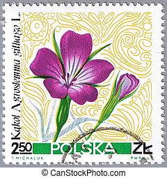 Corn cockle - POLAND - CIRCA 1967: A stamp printed in Poland...