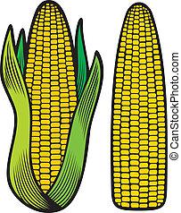 corn (corncob, corncob with green leaves)