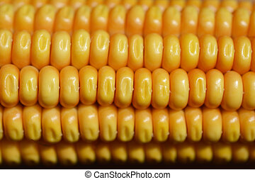 Corn on the cob detail - background wallpaper