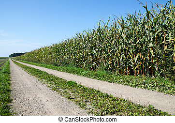 Corn field by a country road - Country road by a corn field...