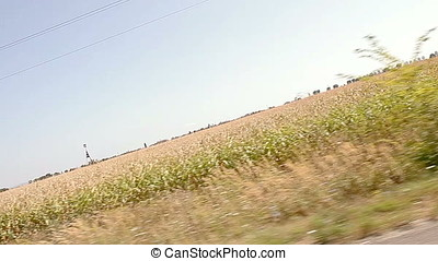 Corn Field Canted Vehicle Shot - Corn field canted vehicle...