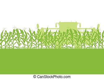 Corn field harvesting with combine harvester green ecology...