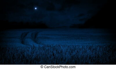 Corn Field In The Moonlight