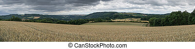 Corn field, Landscape of Eifel, Germany