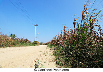 Corn field landscape with dirt road.