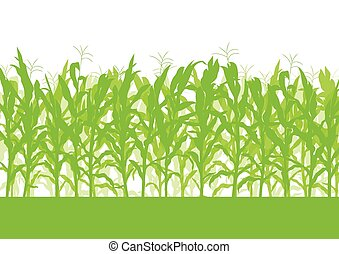 Corn field vector background