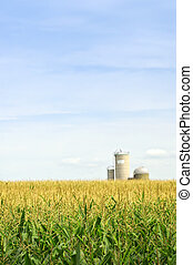 Corn field with silos