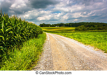 Corn fields along a dirt road in rural Carroll County, Maryland.