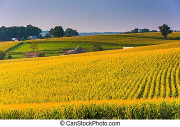 Corn fields in rural York County, Pennsylvania. - Corn...