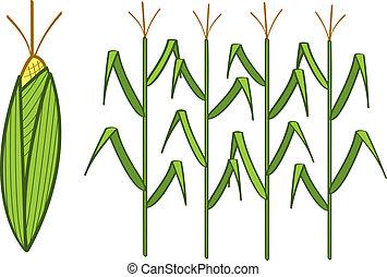 Corn - Four corn stalks and a corn cob.