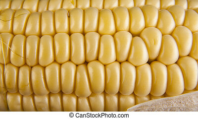 corn grain as a background
