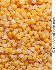 Corn grain close-up