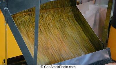 corn grain in separator device under processing, industrial...