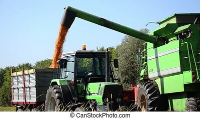 Agriculture, farmland, combine. Harvester machine in action. Corn fields.