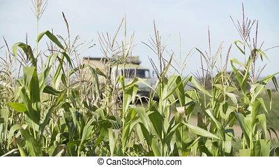 Corn Harvest. Farmers Work Corn Field. Agriculture Corn Farm...