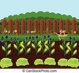 Corn harvest garden Vector. Countryside backgrounds illustration
