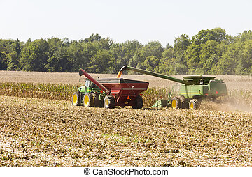 Corn Harvest - Heavy farm equipment collecting the corn and...