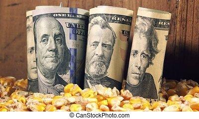 Corn harvest profit in USA