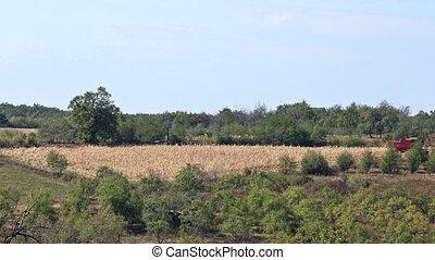 Corn harvest - Time lapse of Corn Harvest