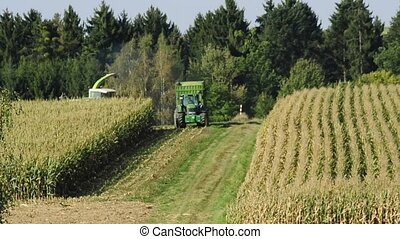 corn harvest with thresher