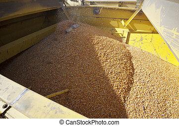 Corn harvester detail