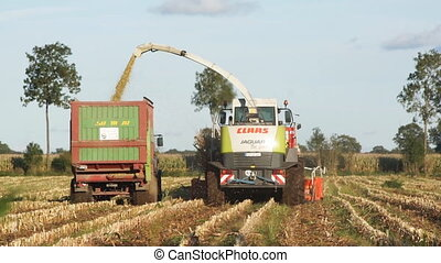 Corn harvesting in Germany