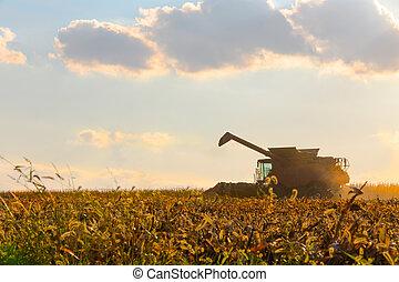 Corn Harvesting Machine in Action