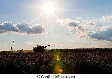 Corn Harvesting Machine Silhouette
