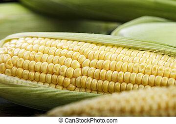 corn heads close up