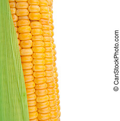Corn in cob isolated over white background
