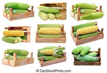 corn in crate