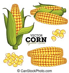 Corn Isolated on White Background, Vector.
